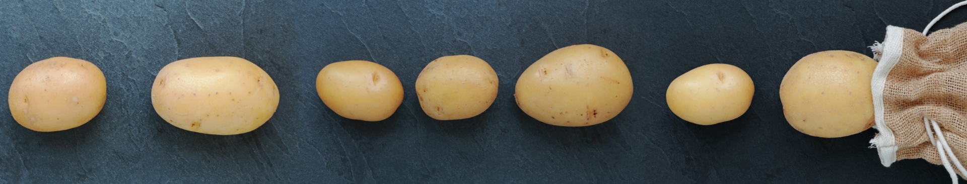 Potatoes in a row