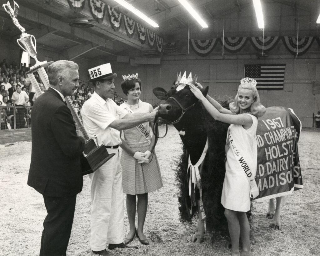 1967 holstein champion